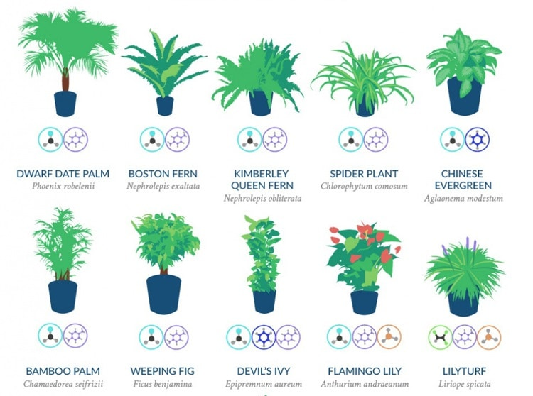 Best Air-Cleaning Plants For Your Home According To NASA...