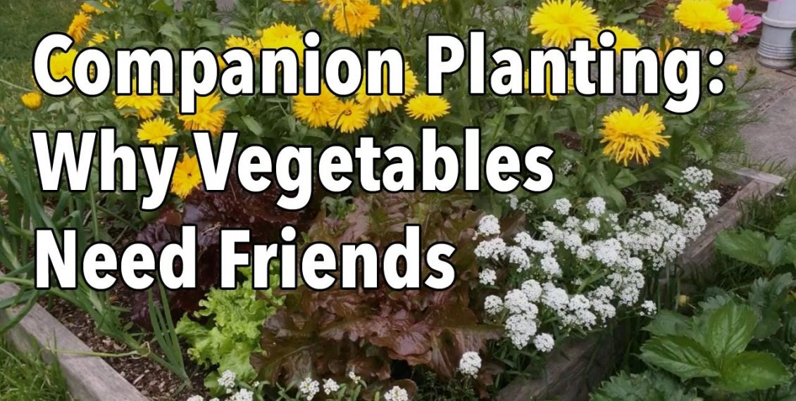 Companion Planting Flowers With Vegetables...