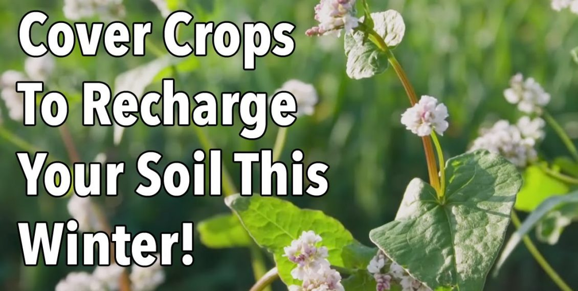 Cover Crops To Recharge Your Soil This Winter...