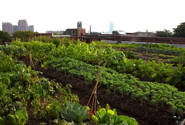 Hospital Constructs Biggest Organic Rooftop Farm In Boston...