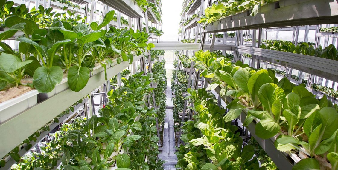The Rise Of Vertical Farming As A Solution To Feed The World...