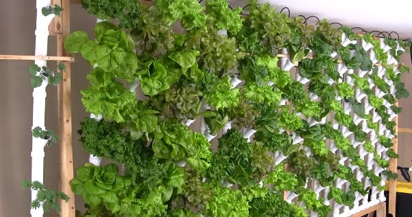 Basement Hydroponic Vertical Tower Garden Produces 133 Heads Of Lettuce...