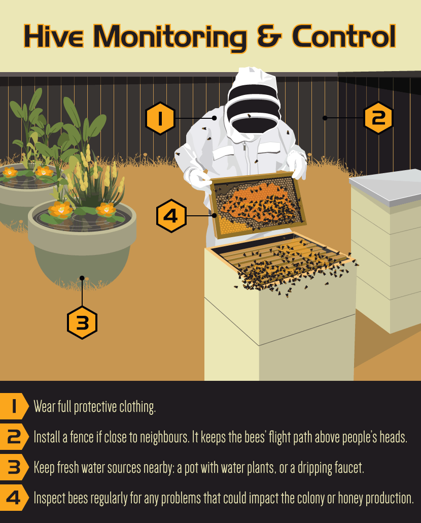 Becoming A Backyard Beekeeper...