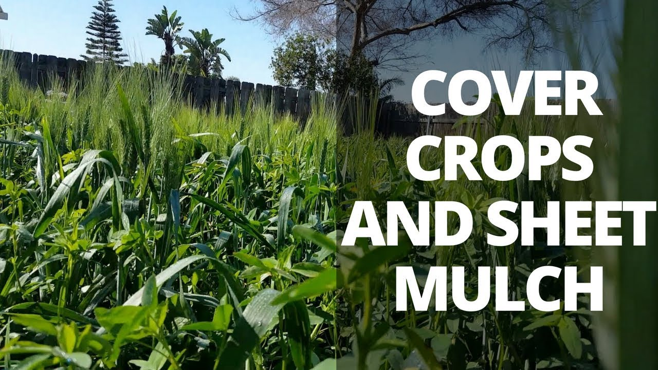 Barren To Fertile Soil: Using Cover Crops & Sheet Mulching...