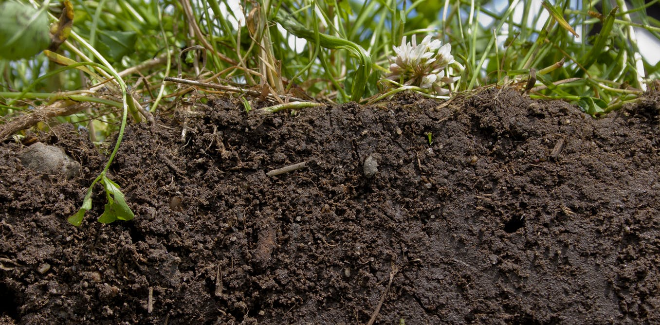 Healthy Soil Is The Real Key To Feeding The World...