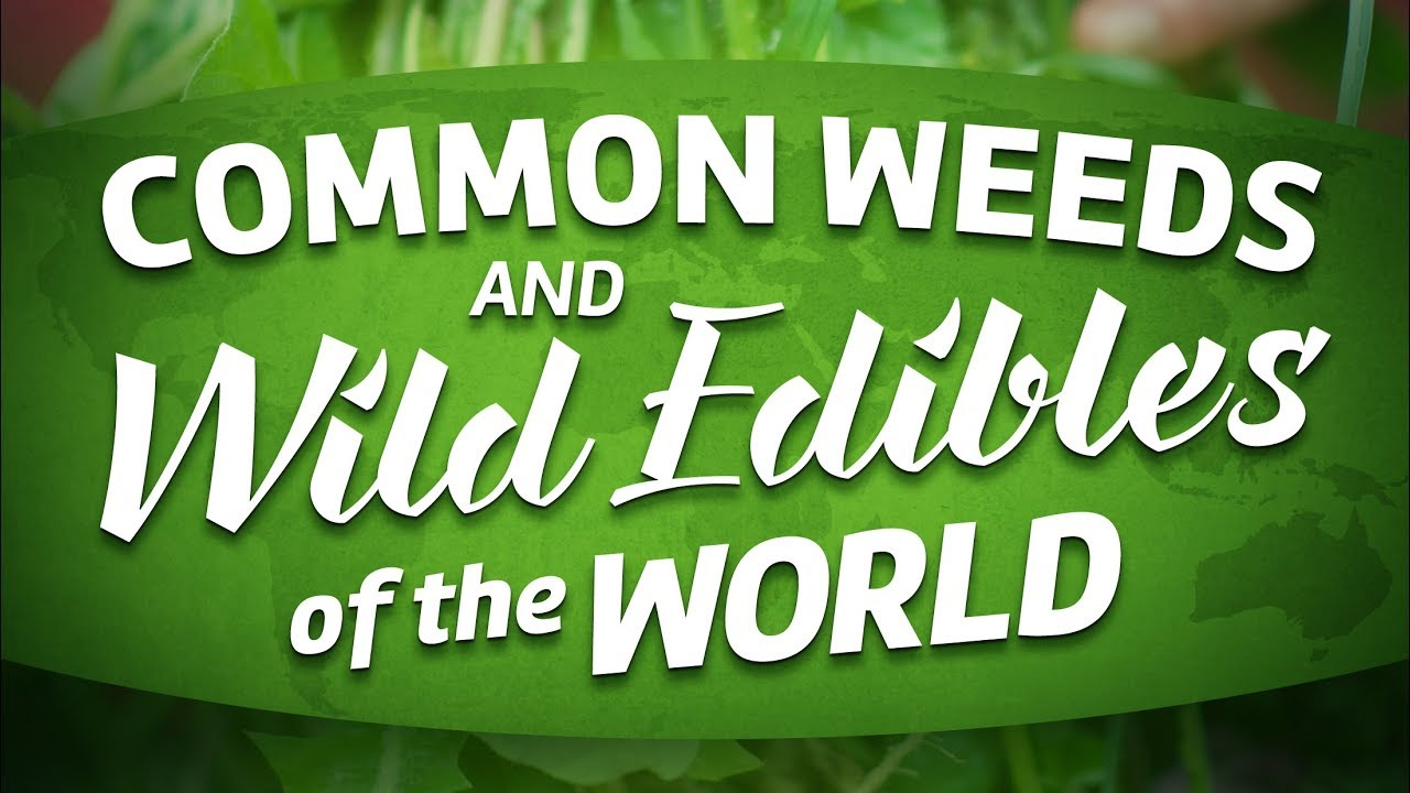 Common Weeds & Wild Edibles Of The World Full Movie About Foraging...