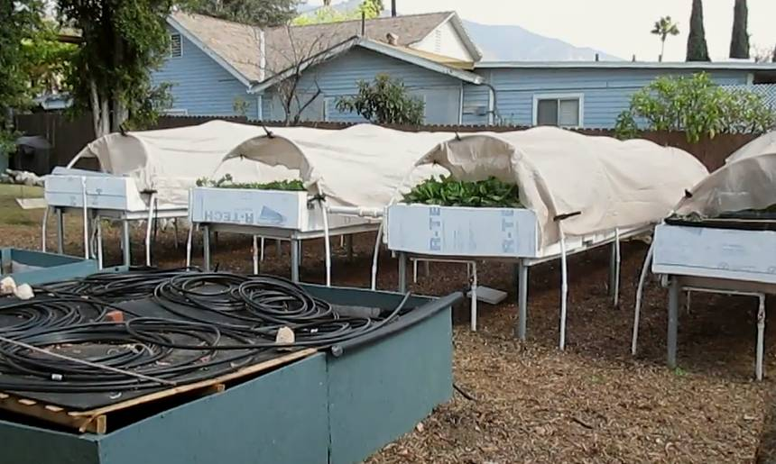 Backyard Aquaponics As A Self-Sustaining Farm In Suburban LA...