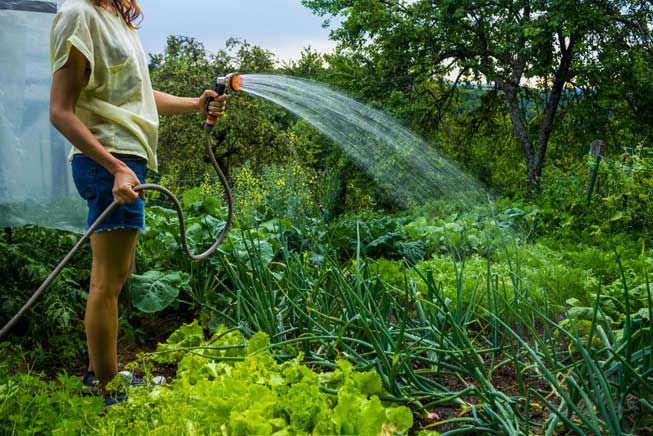 Best Garden Hoses To Buy For Watering The Garden...