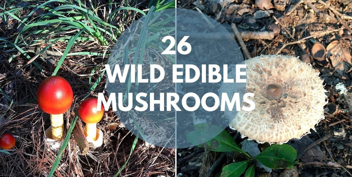 26 Wild Mushrooms You Can Forage For & Eat...