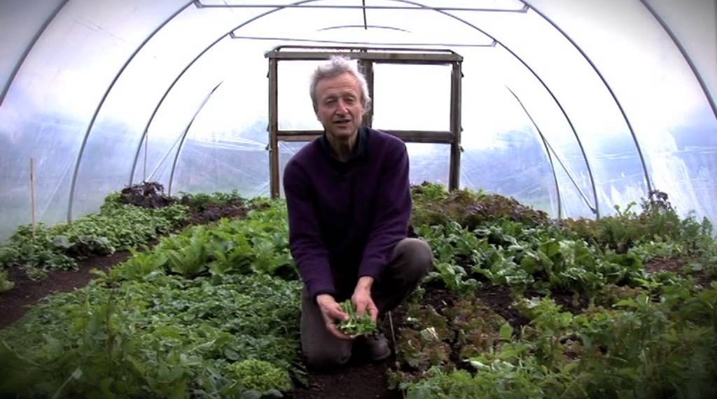 How To Grow Lettuce: Sowing, Planting, Protecting & Picking Method...