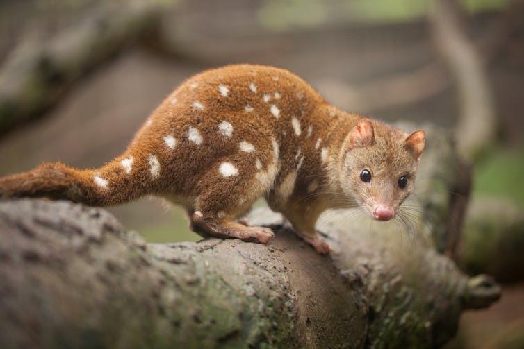 Unprecedented Global Extinction Crisis With A Million Species Facing Extinction...