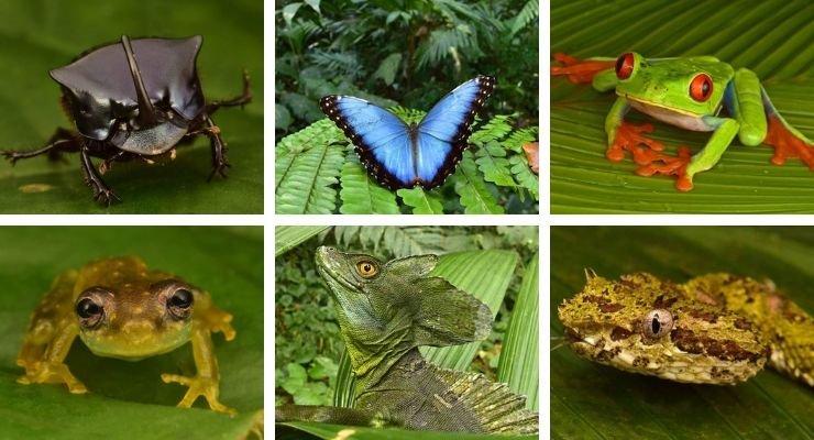 Dozens of 'Extinct' Creatures Found Alive in 'Lost City' Deep Within Rainforest...