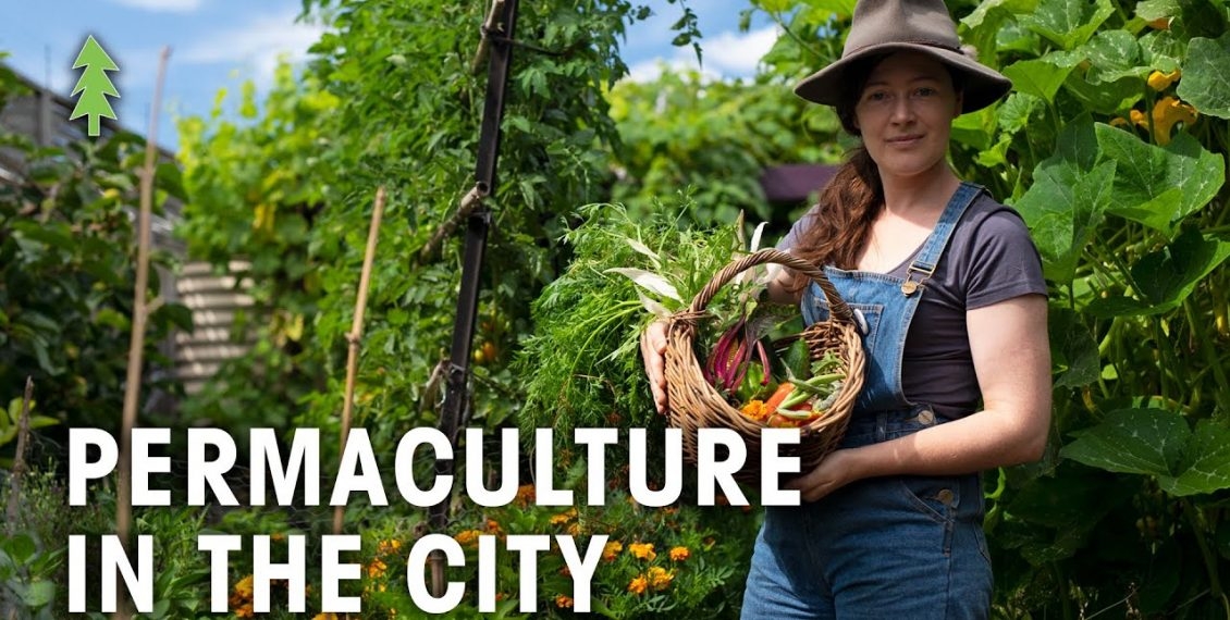 Incredibly Abundant Permaculture Garden In The City Produces Over 400kg Of Food Per Year...