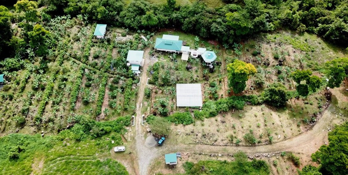 Dreamy Homestead in Costa Rica: Food Abundance In Only Months Of Growth!