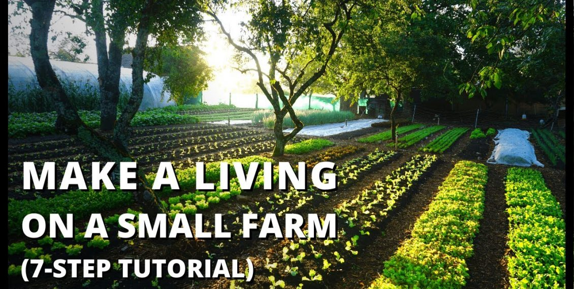 Beginner's Guide To Growing Vegetables For Profit…