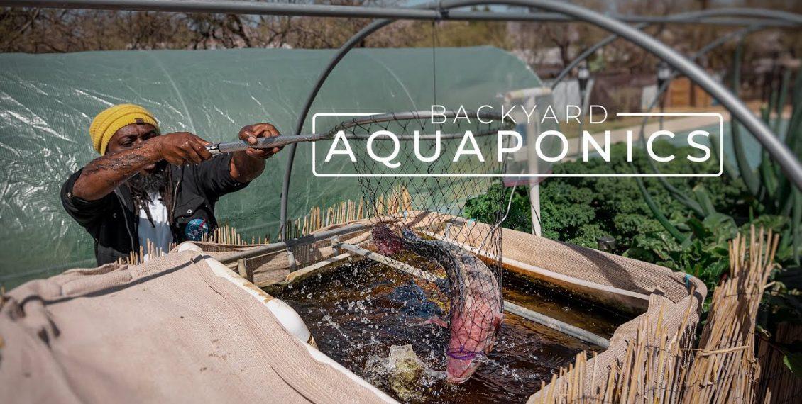 Farming Fresh Fish & Vegetables With Backyard Aquaponics...