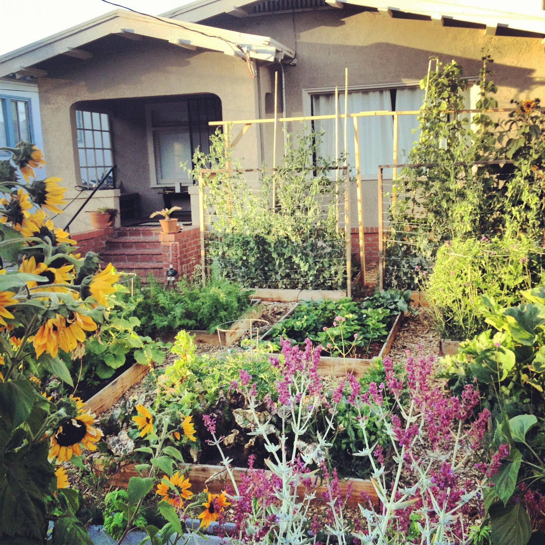 Edible Front Lawn