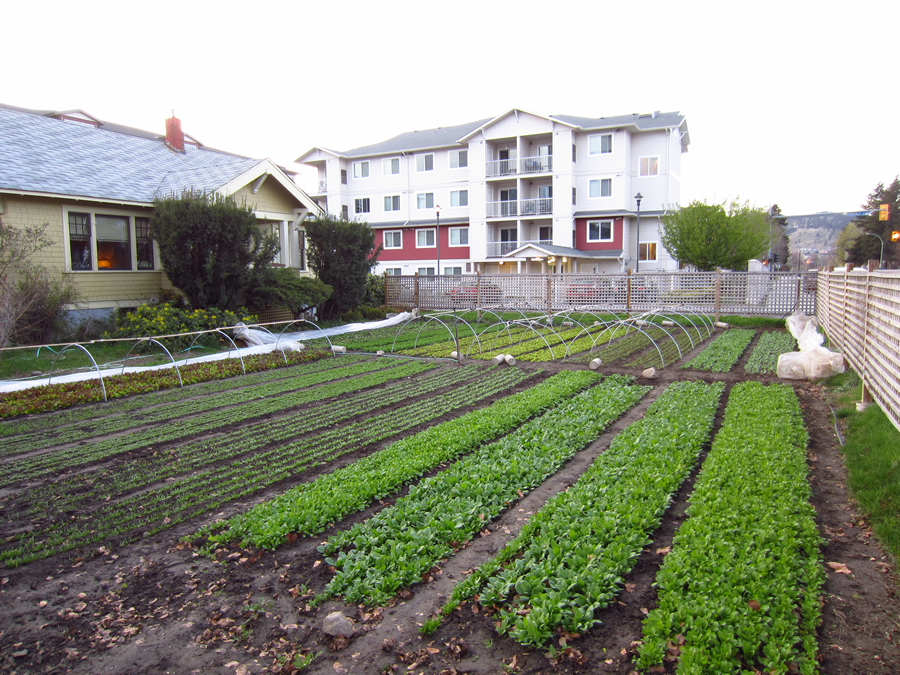 ,000 On 1/3 Acre - 9 Tons Of Vegetables Produced On One ...