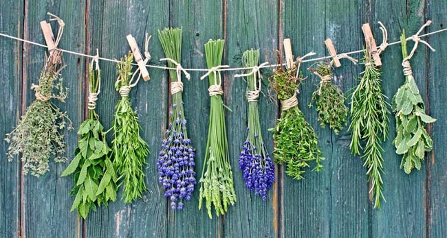 Top 10 Medicinal Plants That You Can Grow Yourself...