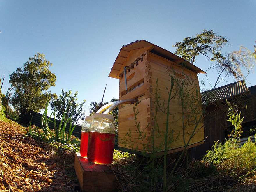 Beehive Lets You Harvest Honey Automatically Without Disturbing Bees...