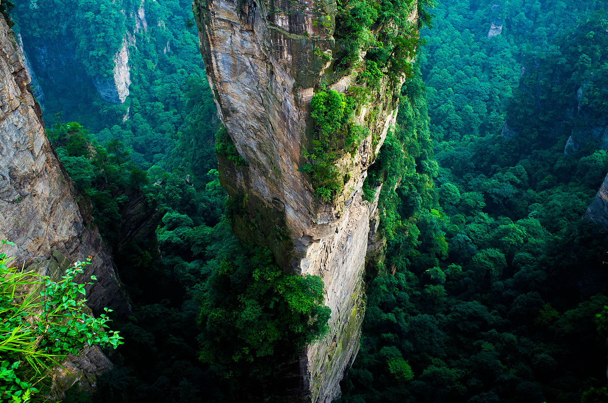 China Announces That It Will Cover Nearly A Quarter Of The Country In Forest By 2020...