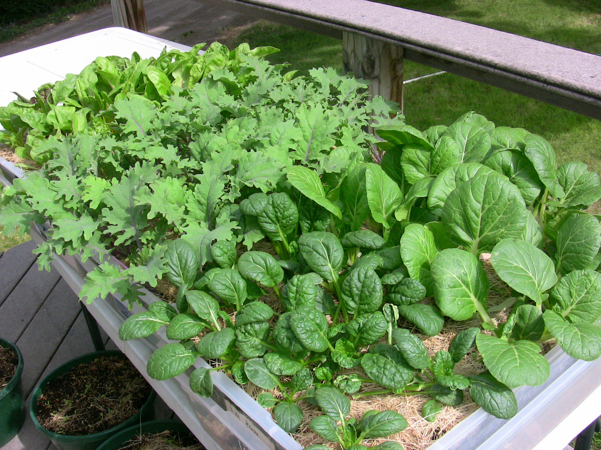 5 Steps To Growing A Successful Apartment Container Garden...