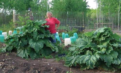 Plant These Plants Once & Harvest The Rewards For Years...