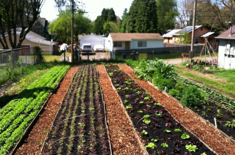 8 Great Reasons To Become A Yard Farmer...