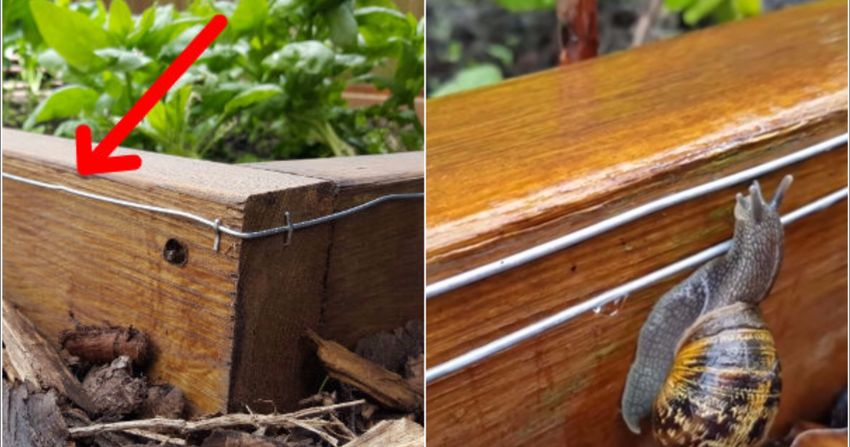How To Make A 9 Volt Electric Fence To Keep Snails & Slug's Out Of Your Garden Beds...