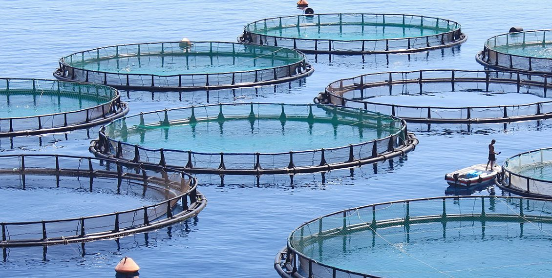 We Must Start Using The Ocean As Farmers Instead Of Hunters – The Case For Fish Farming...