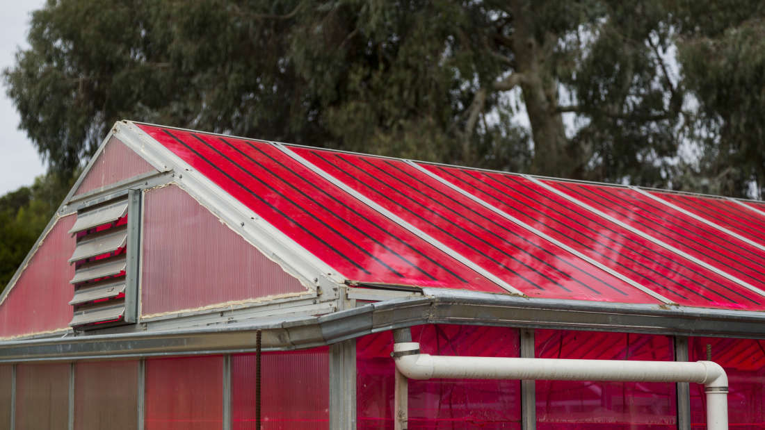 Solar Greenhouses Generate Electricity & Grow Crops At The Same Time...
