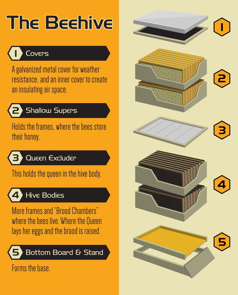 Becoming A Backyard Beekeeper...