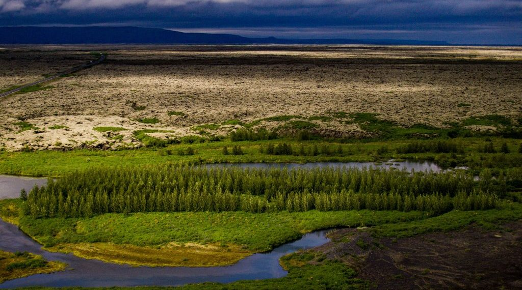 Iceland Is Growing New Forests For The First Time In 1,000 Years...