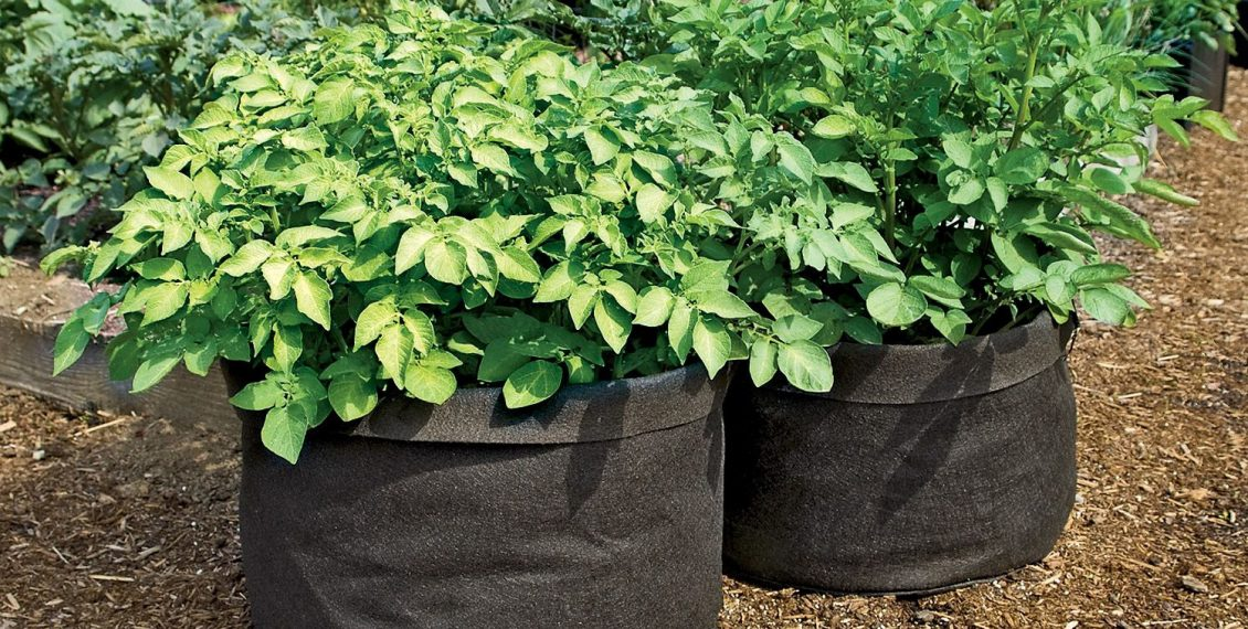 Best Selling Grow Bags & Fabric Plant Pots - Reviews...