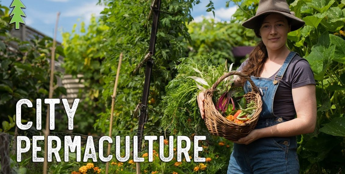Growing An Abundance Of Food In The City Using Permaculture...