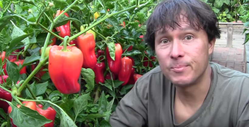 How I Doubled My Pepper Production Without Pruning...