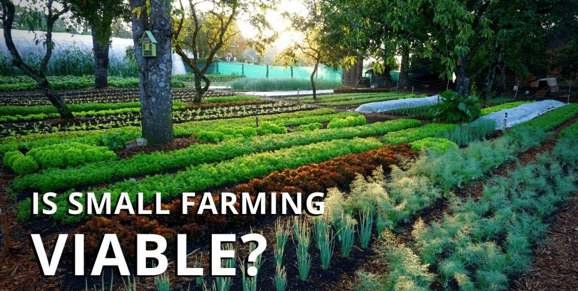 Is Market Gardening Profitable? Making A Living On A Small Farm…