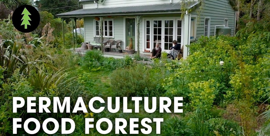 Incredible 1.5-Acre Permaculture Food Forest with Over 250 Plant Species...