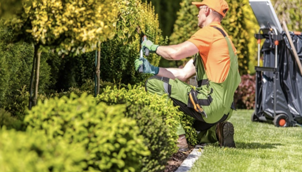 6 Ways To Make Your Landscaping Business Significantly More Eco-Friendly...